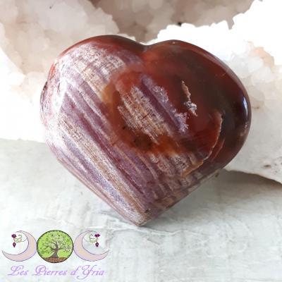 Coeur Bois pétrifié (fossile)