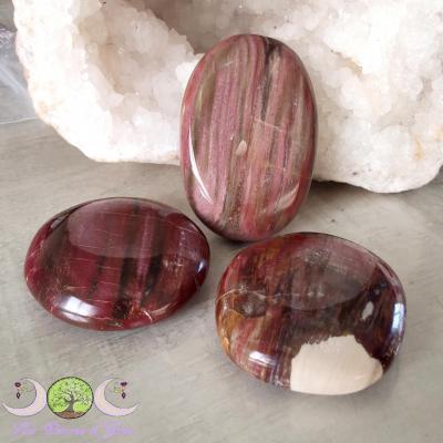 Galet Bois pétrifié (fossile)