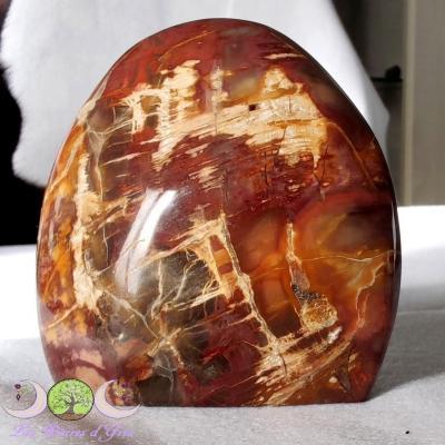 Forme libre Bois pétrifié (fossile)
