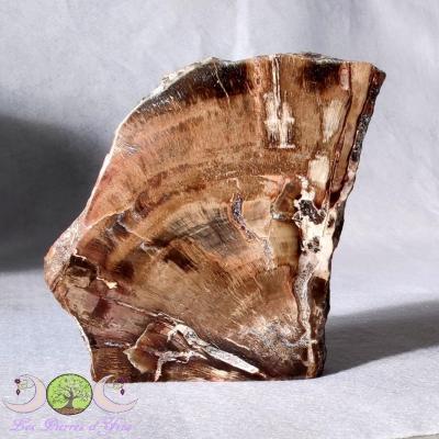 Forme libre semi-polie Bois pétrifié (fossile)