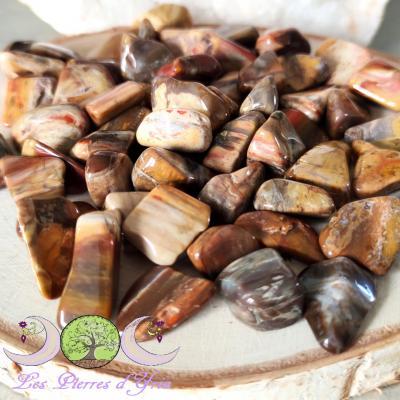 Bois pétrifié (fossile) [pierre roulée]